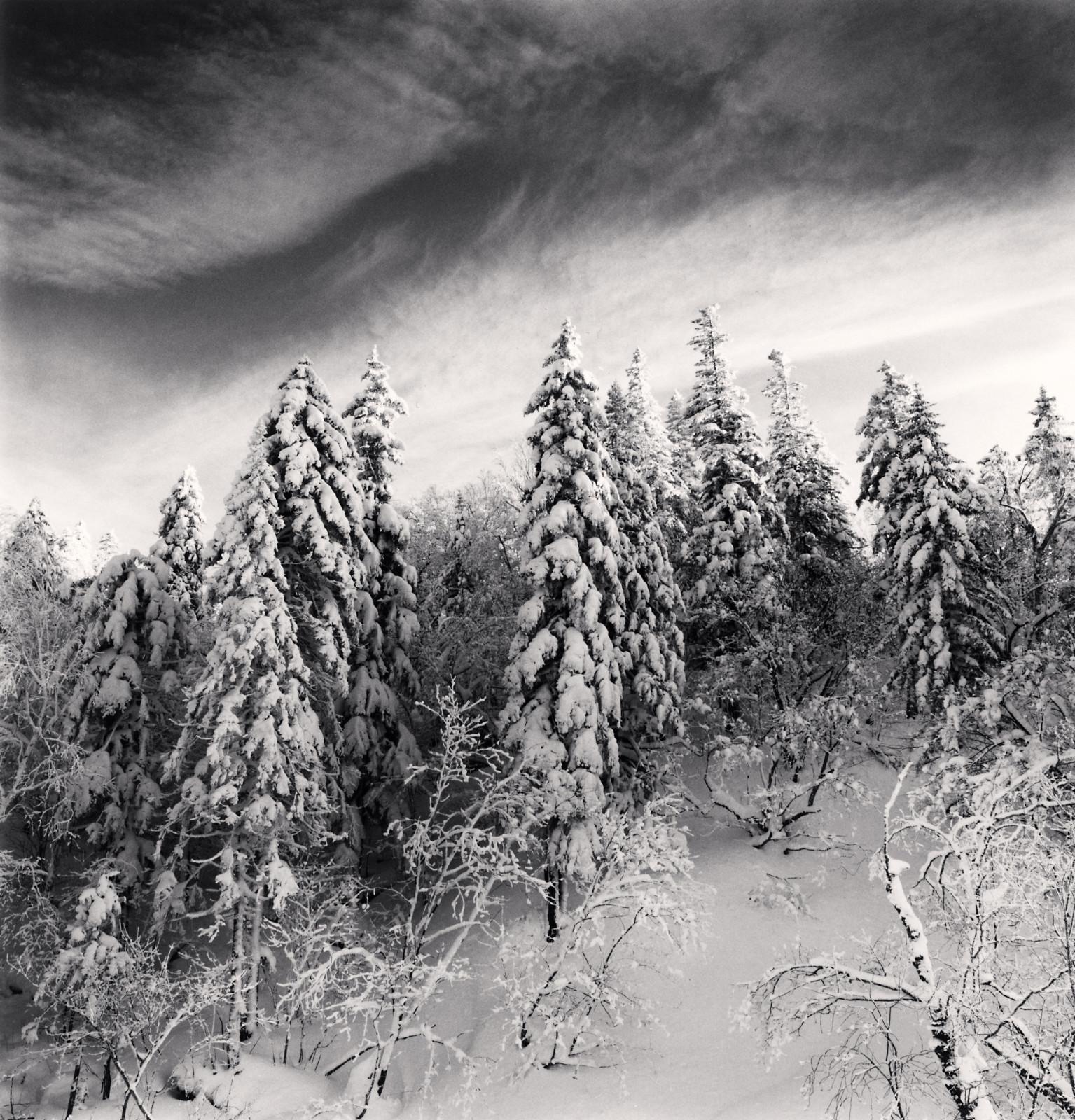 Snow Clad Trees, Heilongjiang, China, 2012