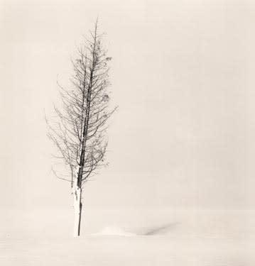 Tree Portrait #2, 2002
