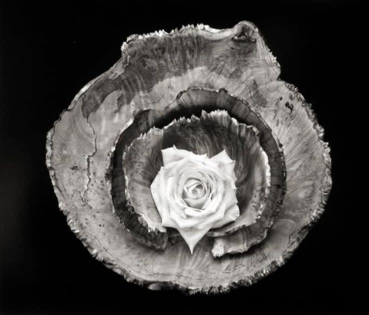 Paul Caponigro, Rose Bowl Still Life