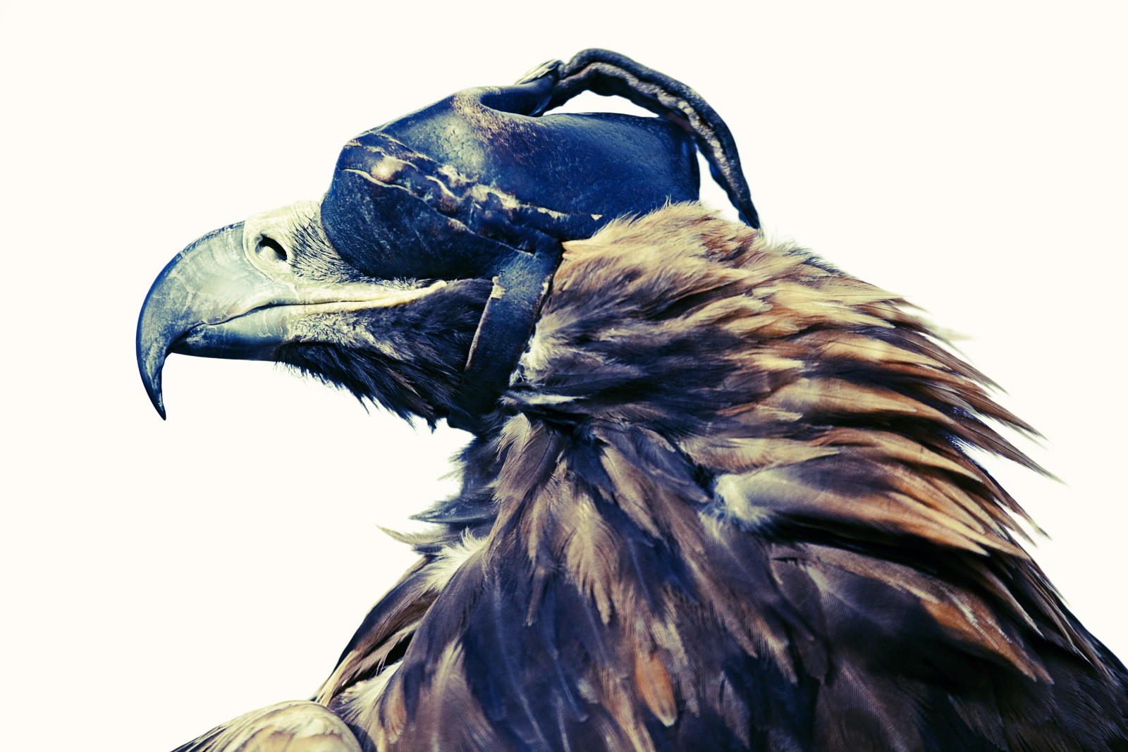Eagle Hunter #1