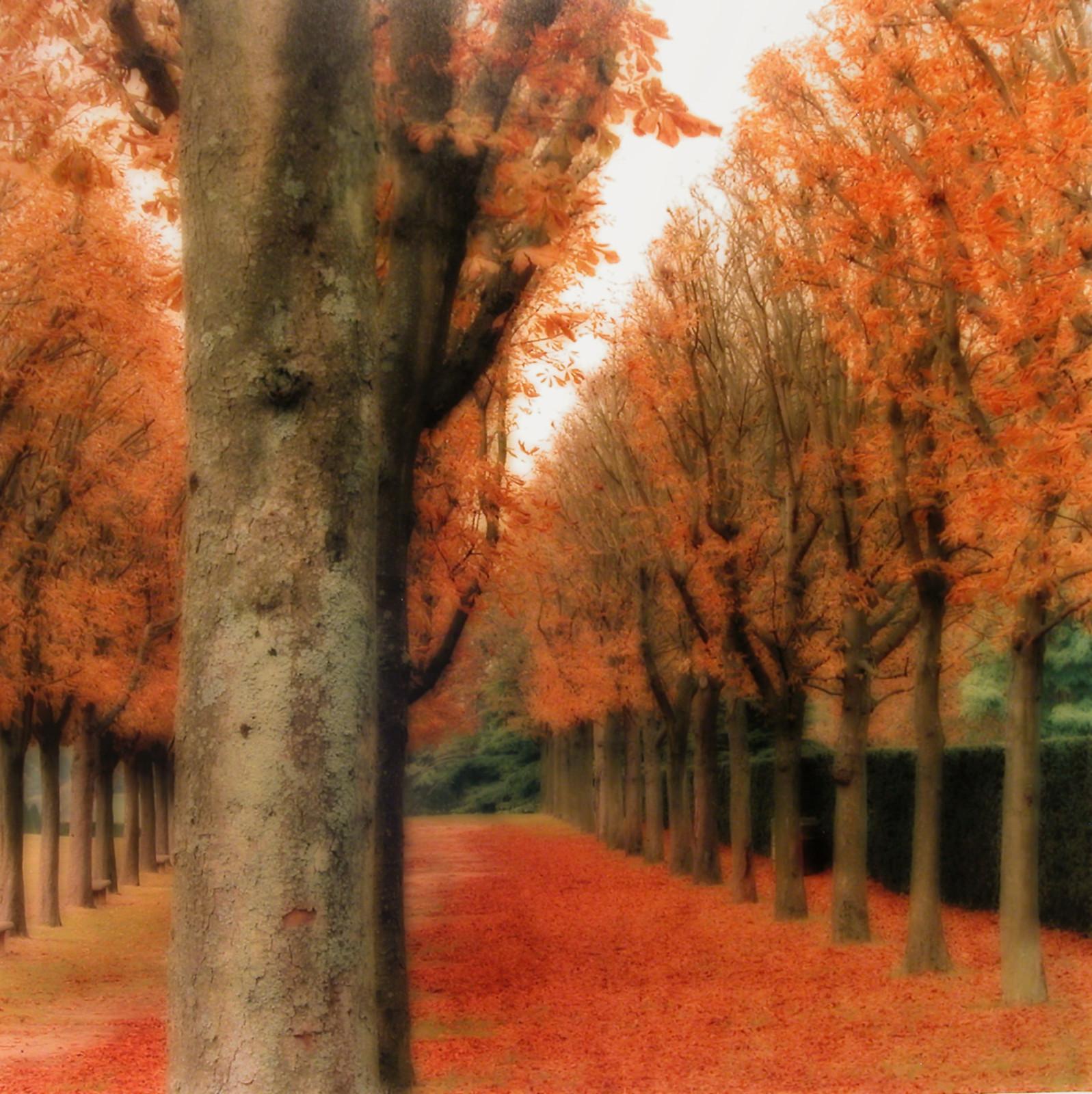 Parc de Sceaux, France (10-08-5c-5), 2008