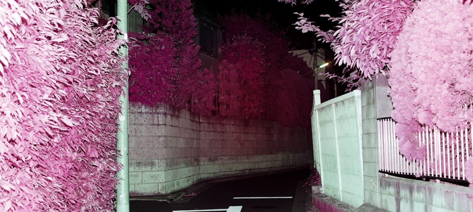 pathway at night