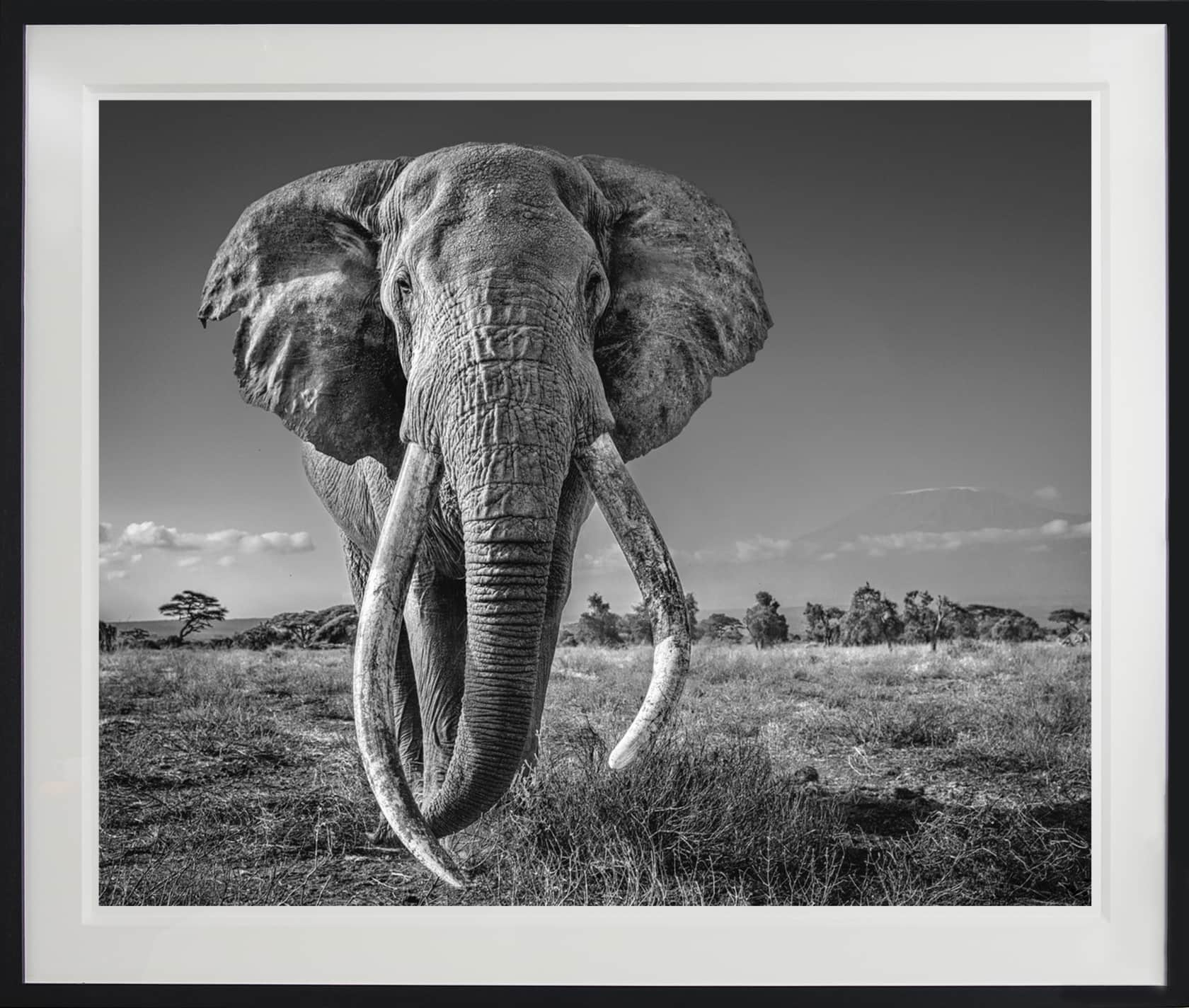 David Yarrow Space for Giants Archival Pigment Print