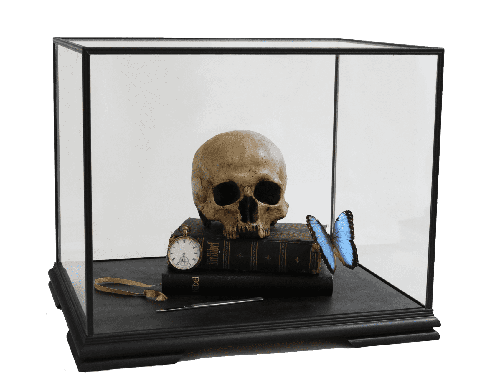 the connor brothers Memento Mori with Heilige Schrift and Morpho Peleides Cast human skull, 19th Century books, antique syringe and...