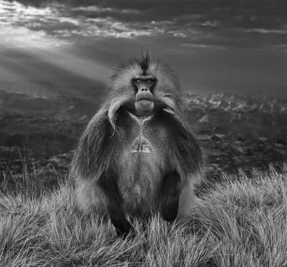David Yarrow Members Only Archival pigment print