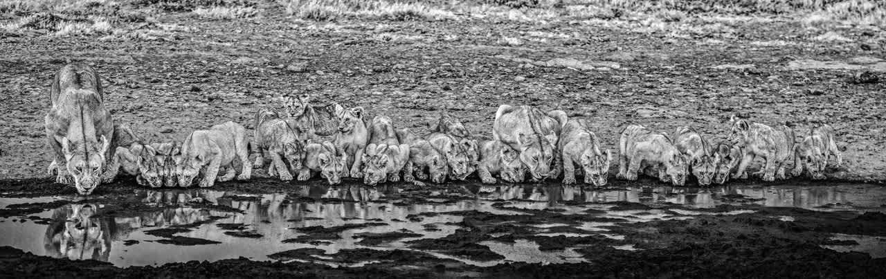 David Yarrow, One for the Road, 2020