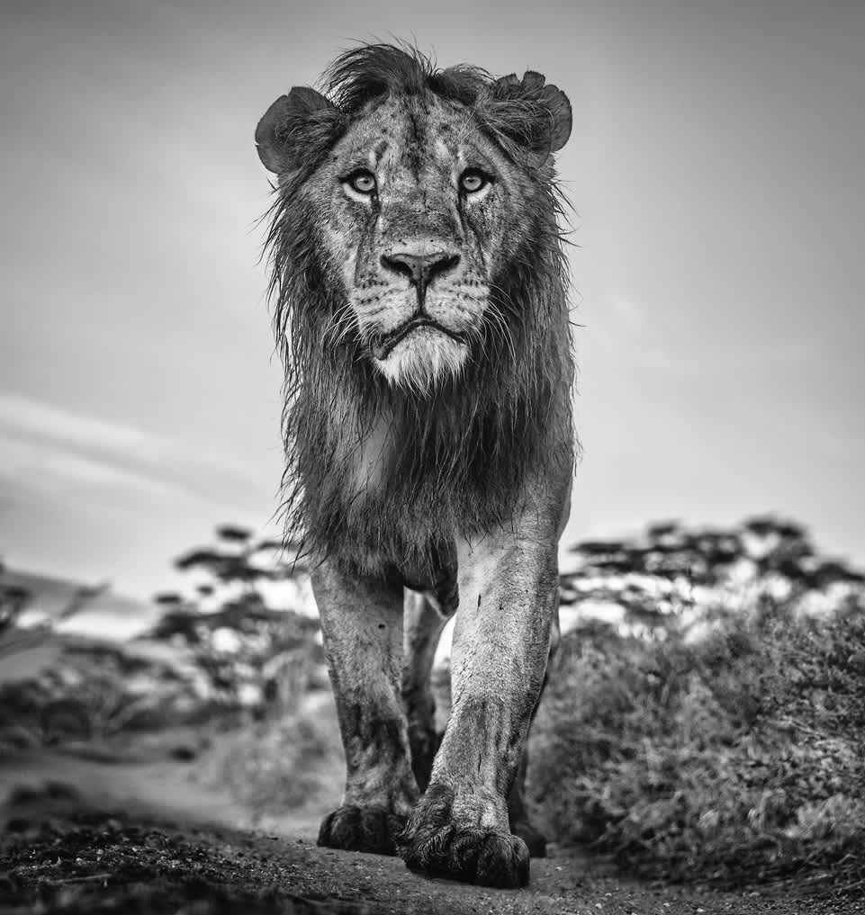 David Yarrow, The Morning Show, 2020