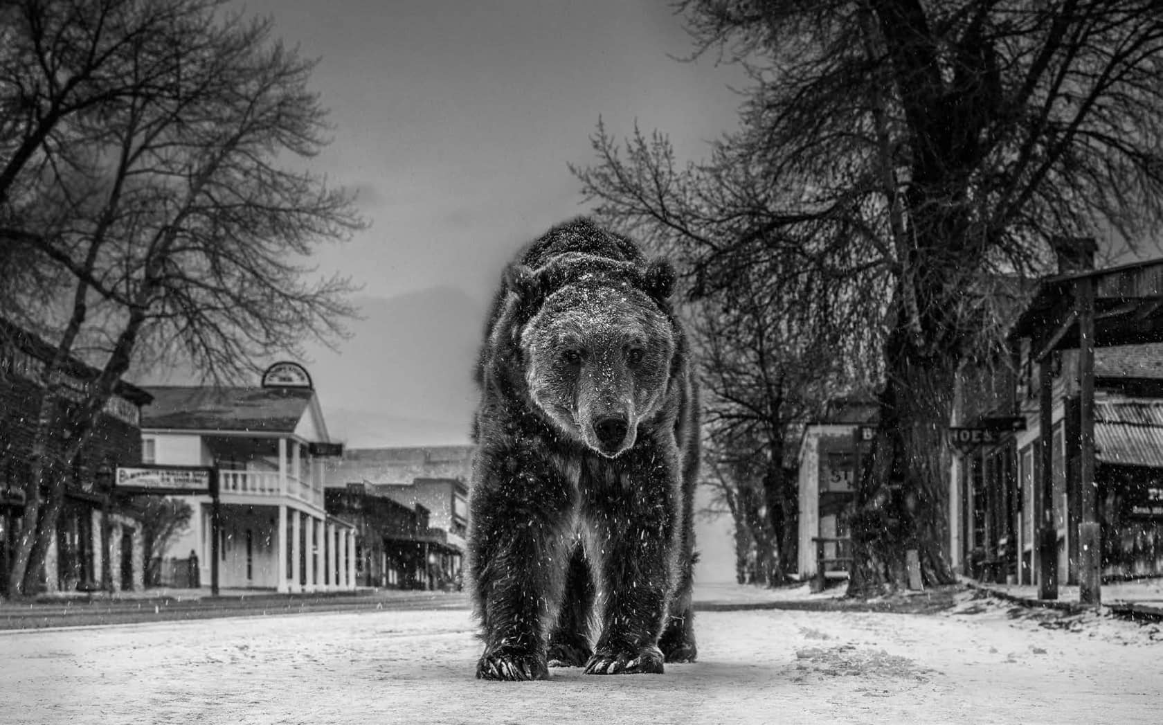 David Yarrow, Out of Towner, 2019