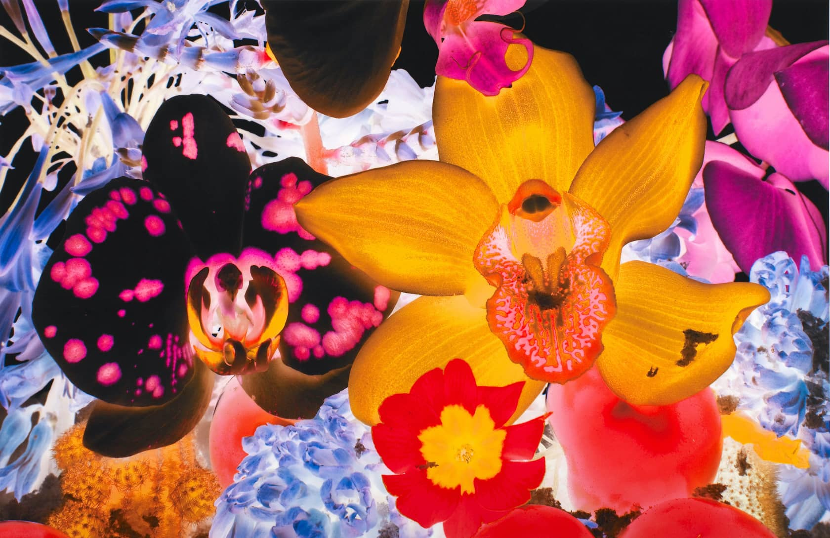 Marc Quinn At the Far Edges of the Universe #5 Pigment Print