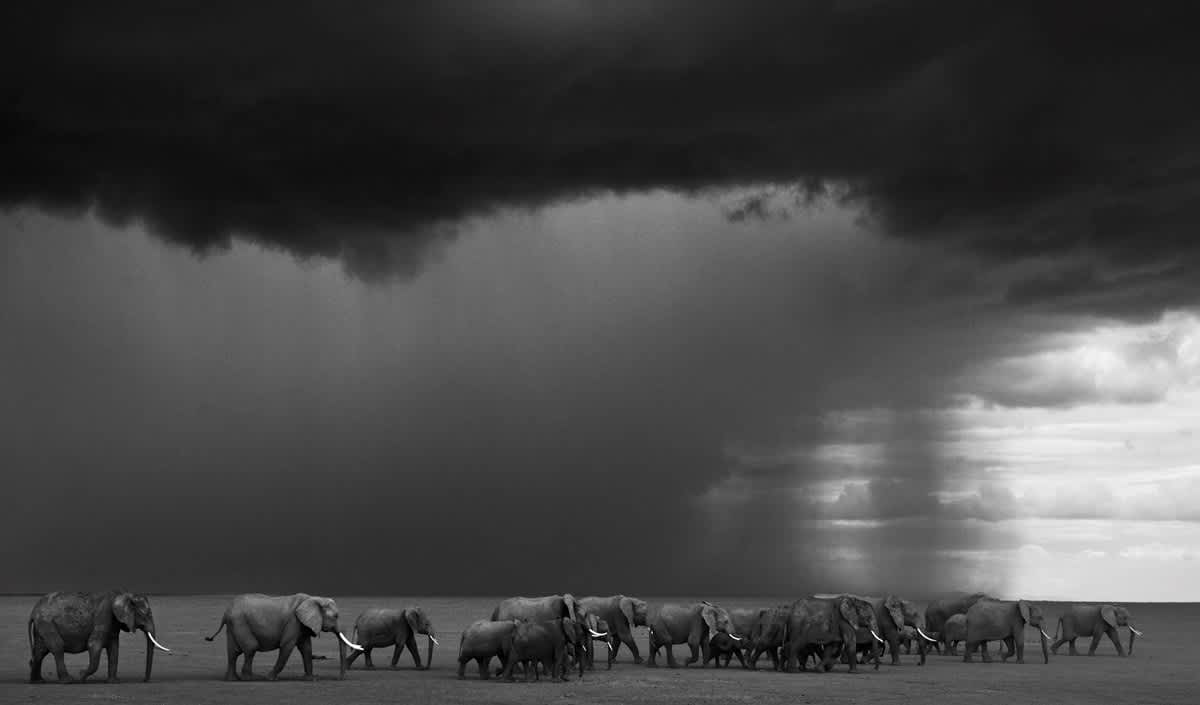 david yarrow, The Gathering Storm, 2012