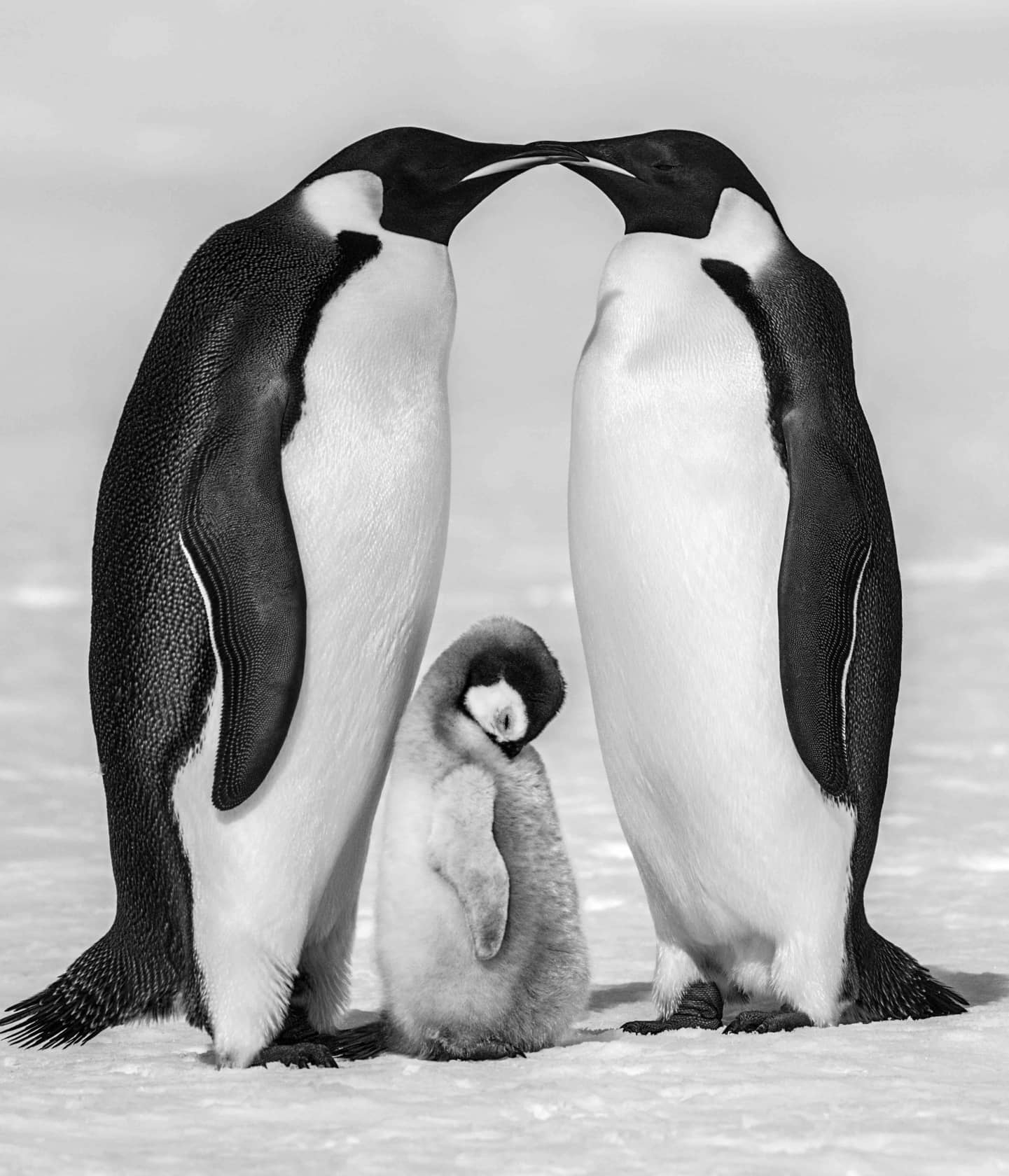David Yarrow Contentment II Archival Pigment Print