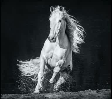 David Yarrow, Horsepower, 2020