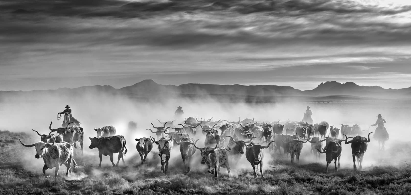 David Yarrow The Thundering Herd Archival Pigment Print