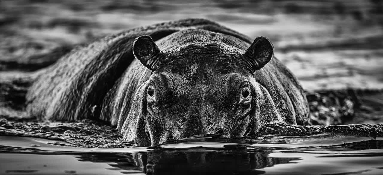 David Yarrow, The Last Dance, 2020