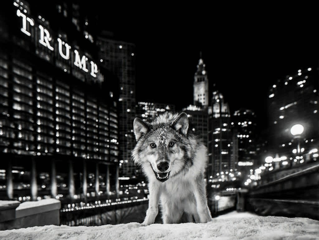 David Yarrow, It's Only a Matter of Time, 2016