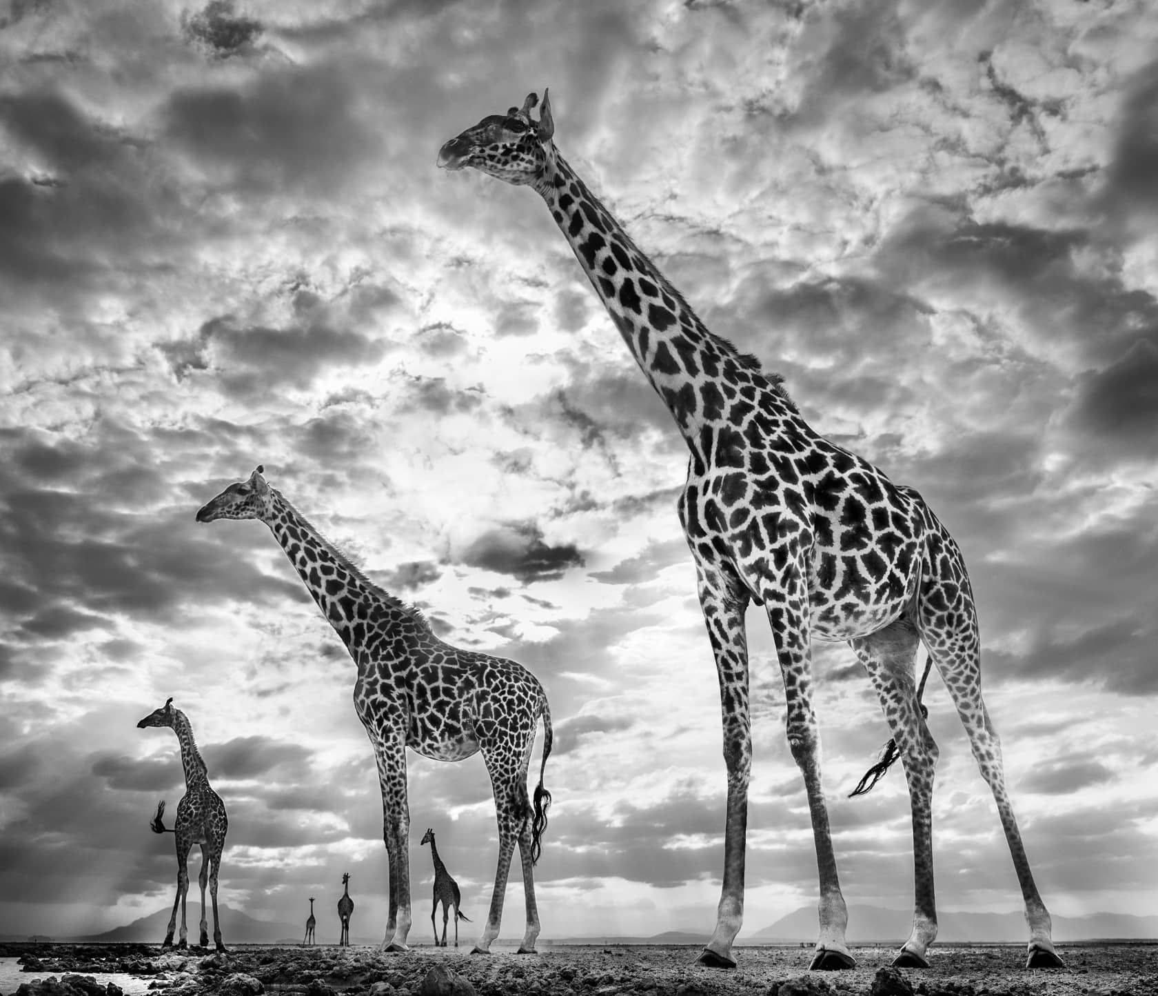 David Yarrow, Keeping Up With the Crouches, 2019