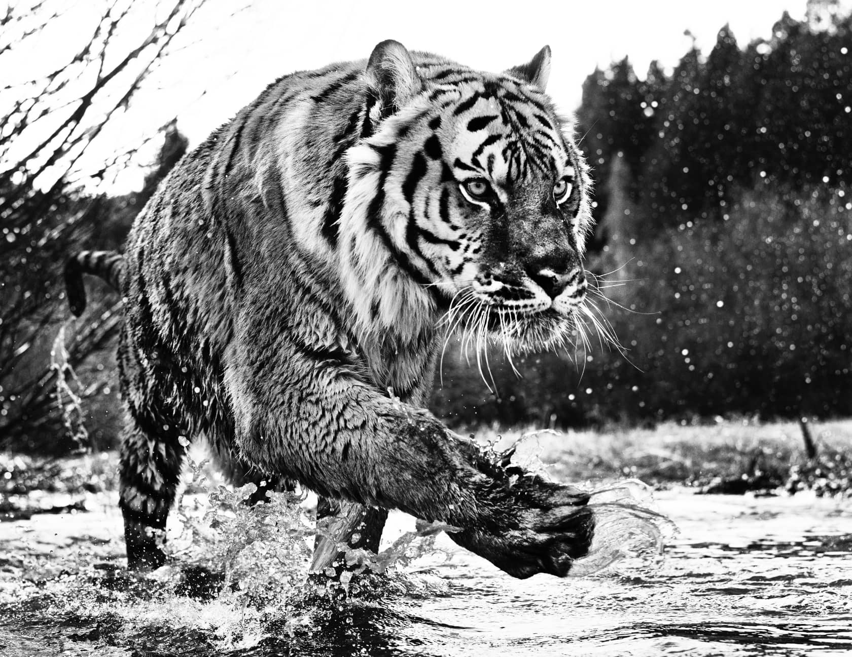 David Yarrow, Mystic River, 2015