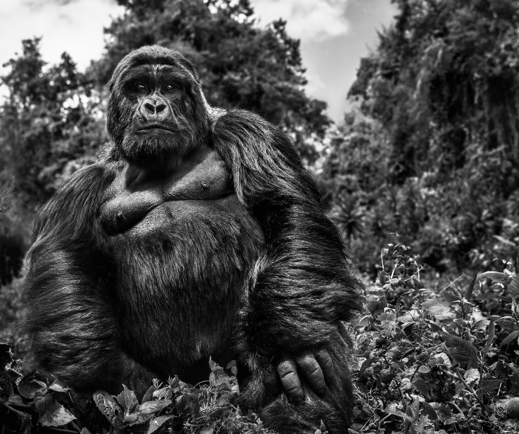 David Yarrow, Judge and Jury, 2019