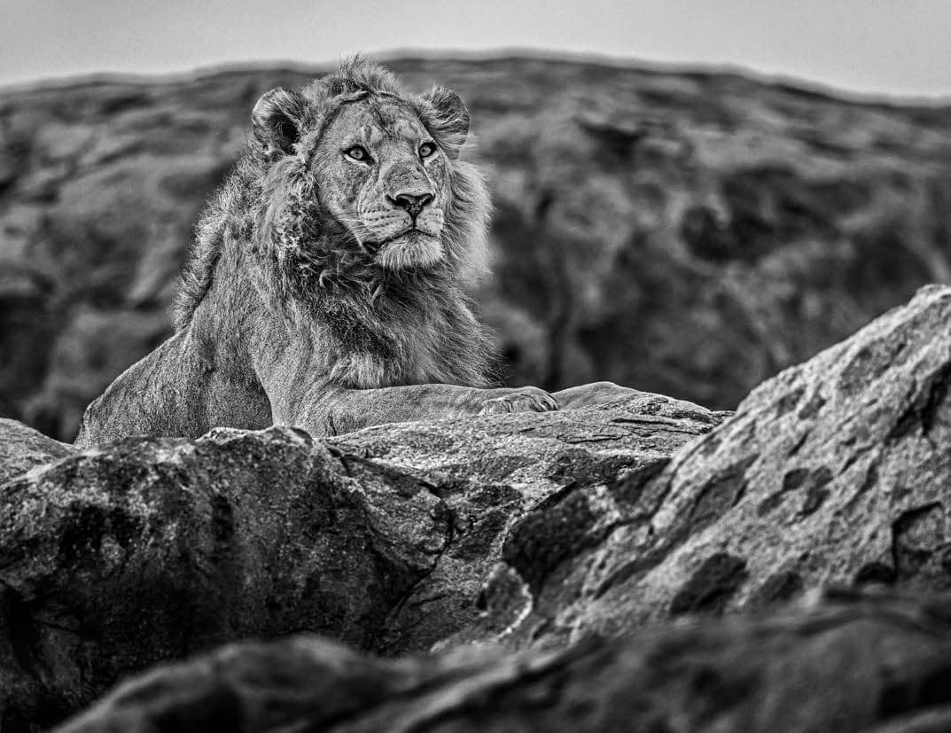 David Yarrow, Serengeti, 2019