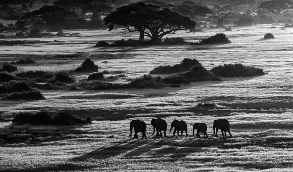 David Yarrow Dawn Commute Archival Pigment Print