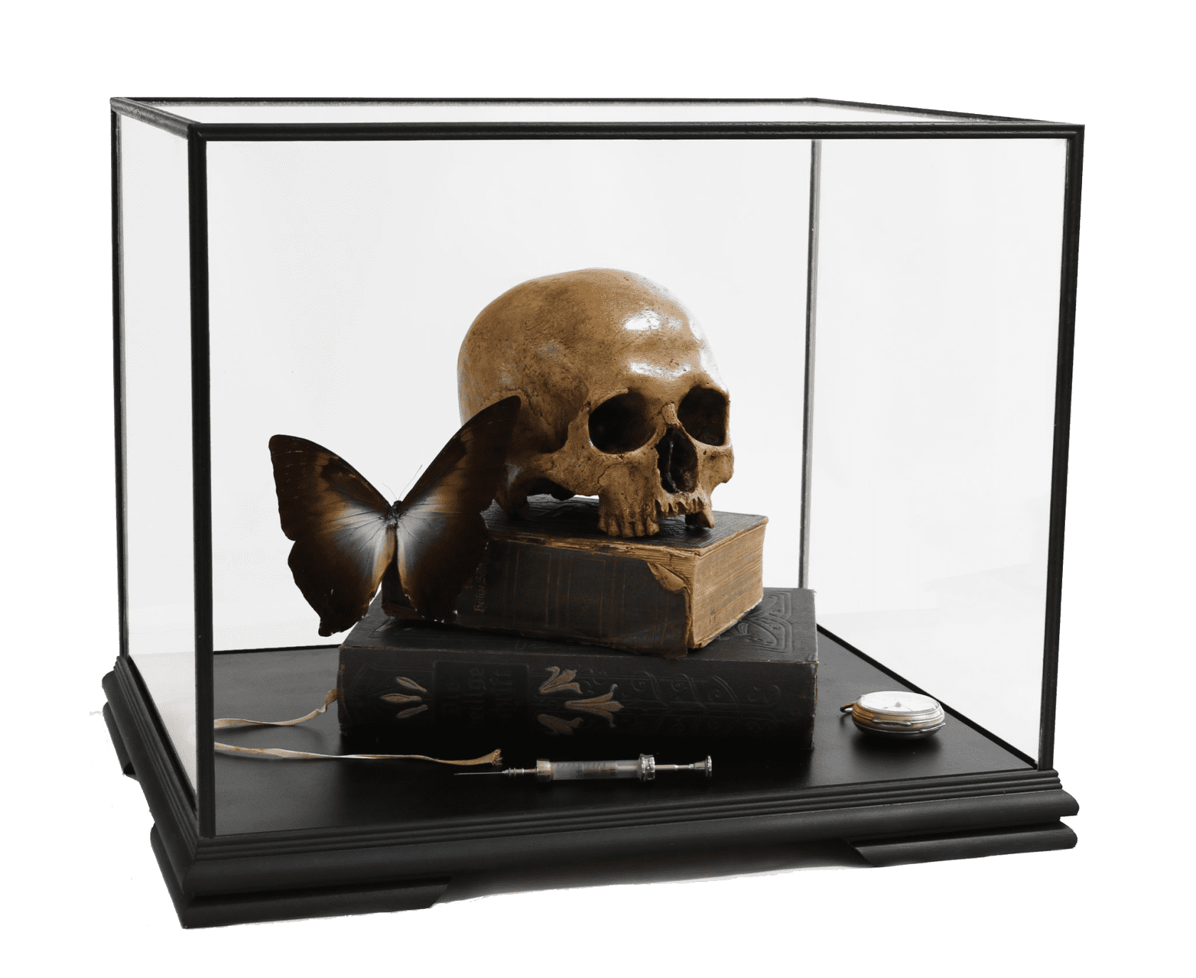 the connor brothers Memento Mori with Heilige Schrift and Morpho Telemachus Cast human skull, 19th Century books, antique syringe and...