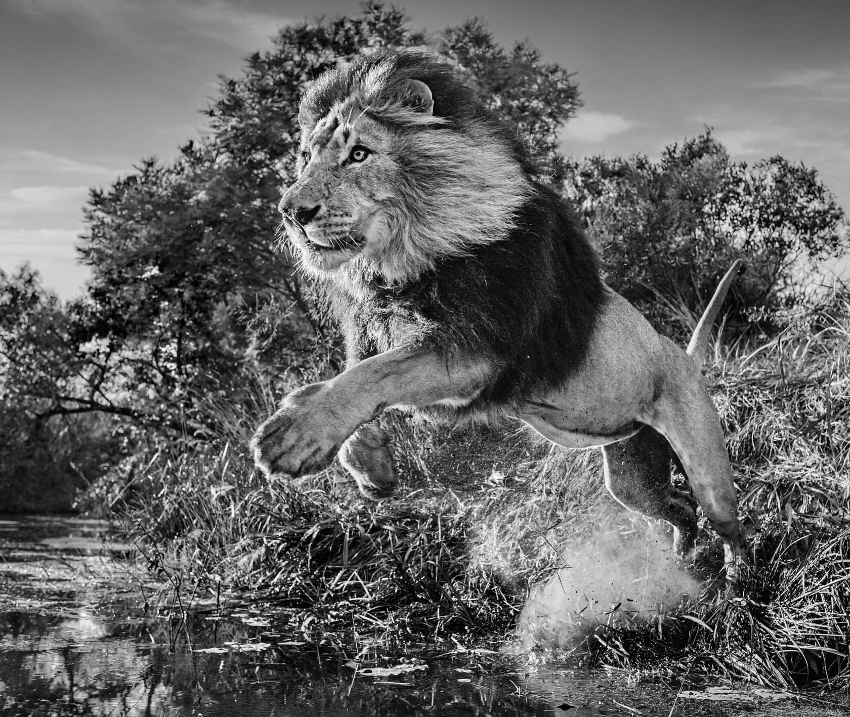 David Yarrow, First Down, 2020