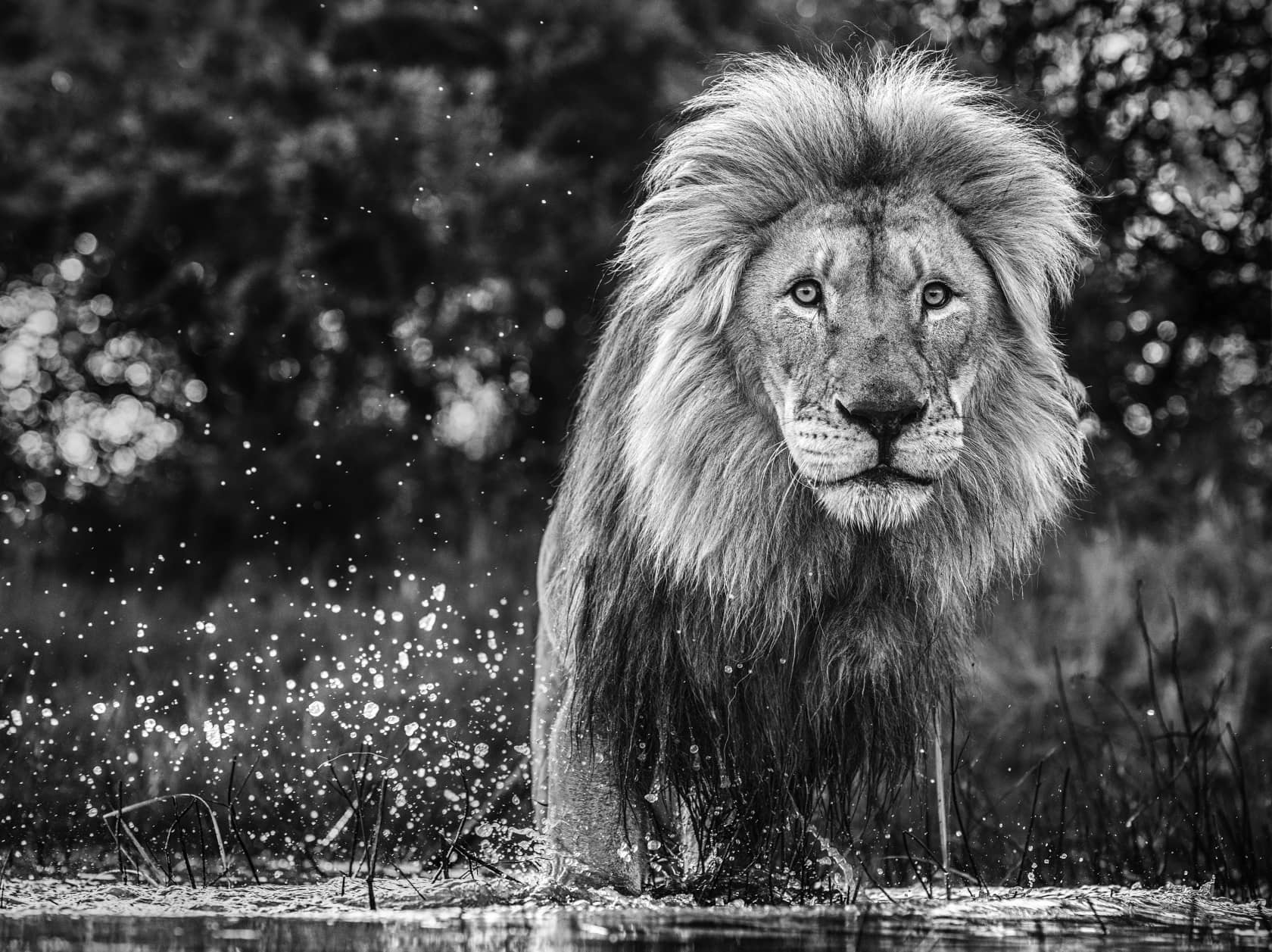 David Yarrow After The Flood Archival Pigment Print