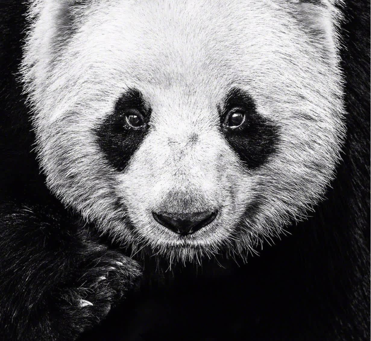 David Yarrow, Kung Fu Panda, 2016