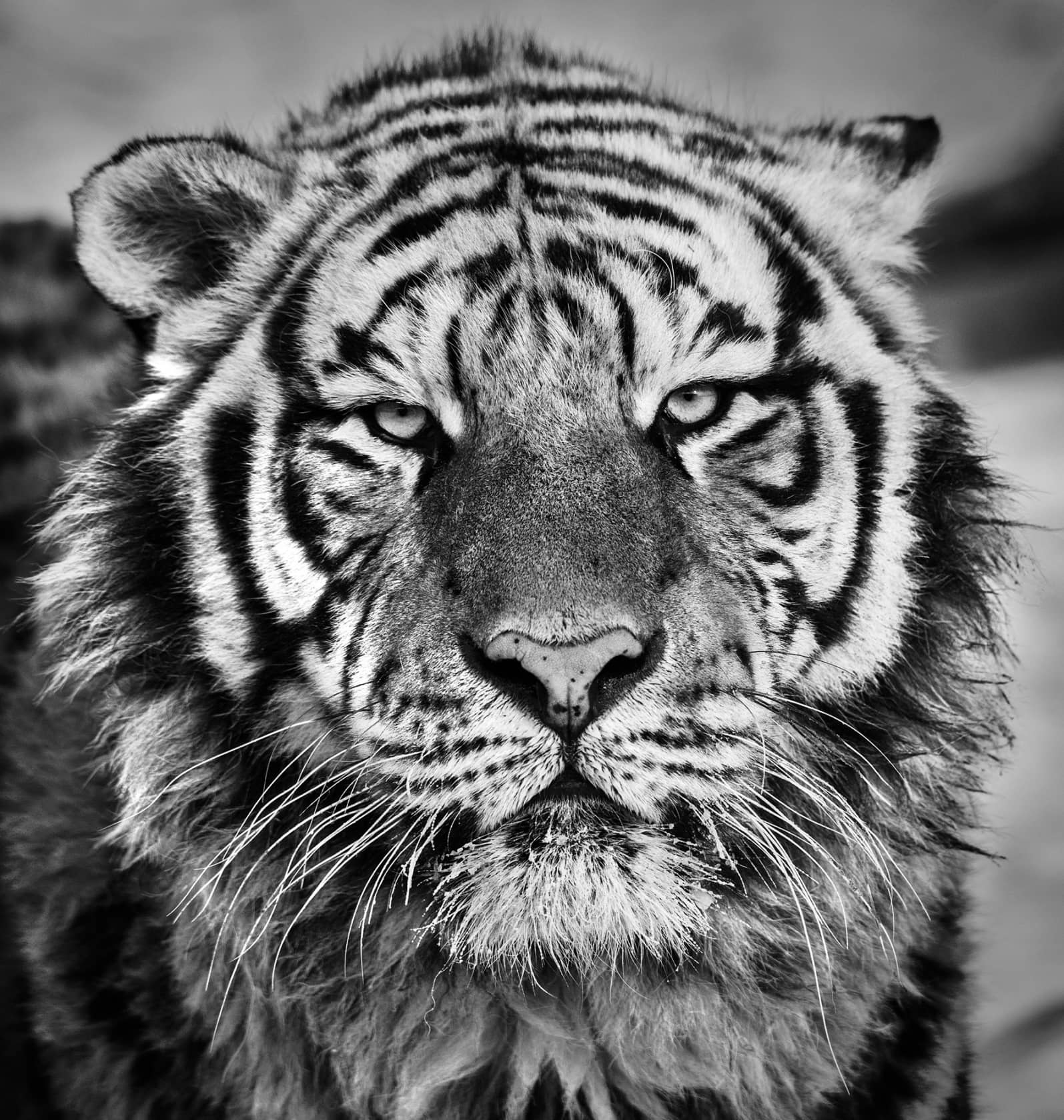 David Yarrow Harbin Archival pigment print