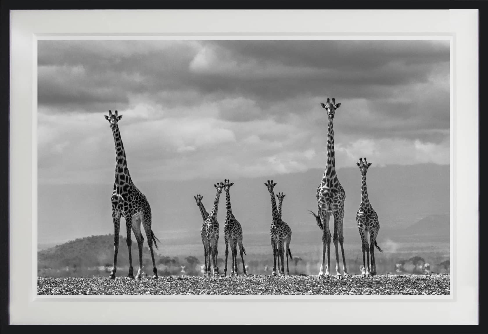 David Yarrow Giraffe City Archival Pigment Print