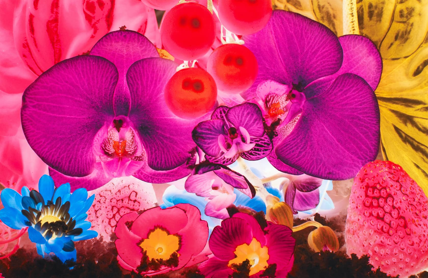 Marc Quinn At the Far Edges of the Universe #4 Pigment Print