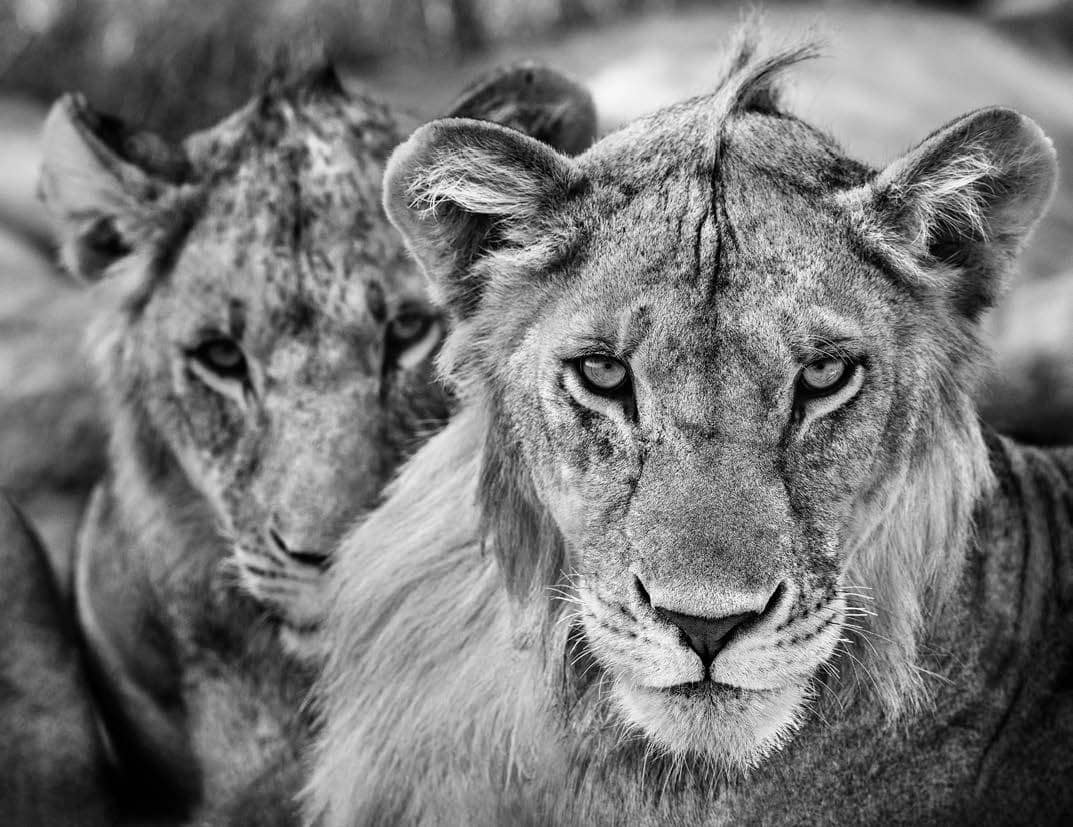 David Yarrow, The Boys Are Back in Town, 2019