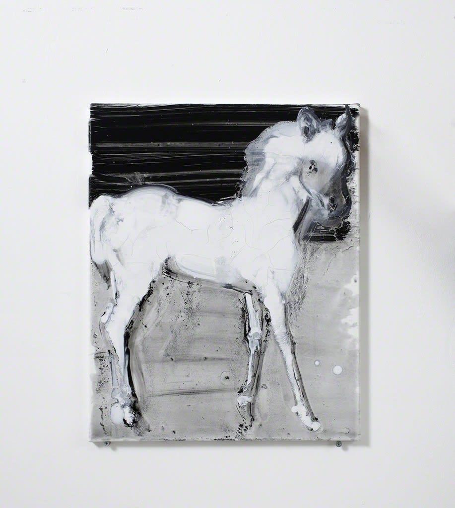 Ilona Szalay, White Horse, 2016