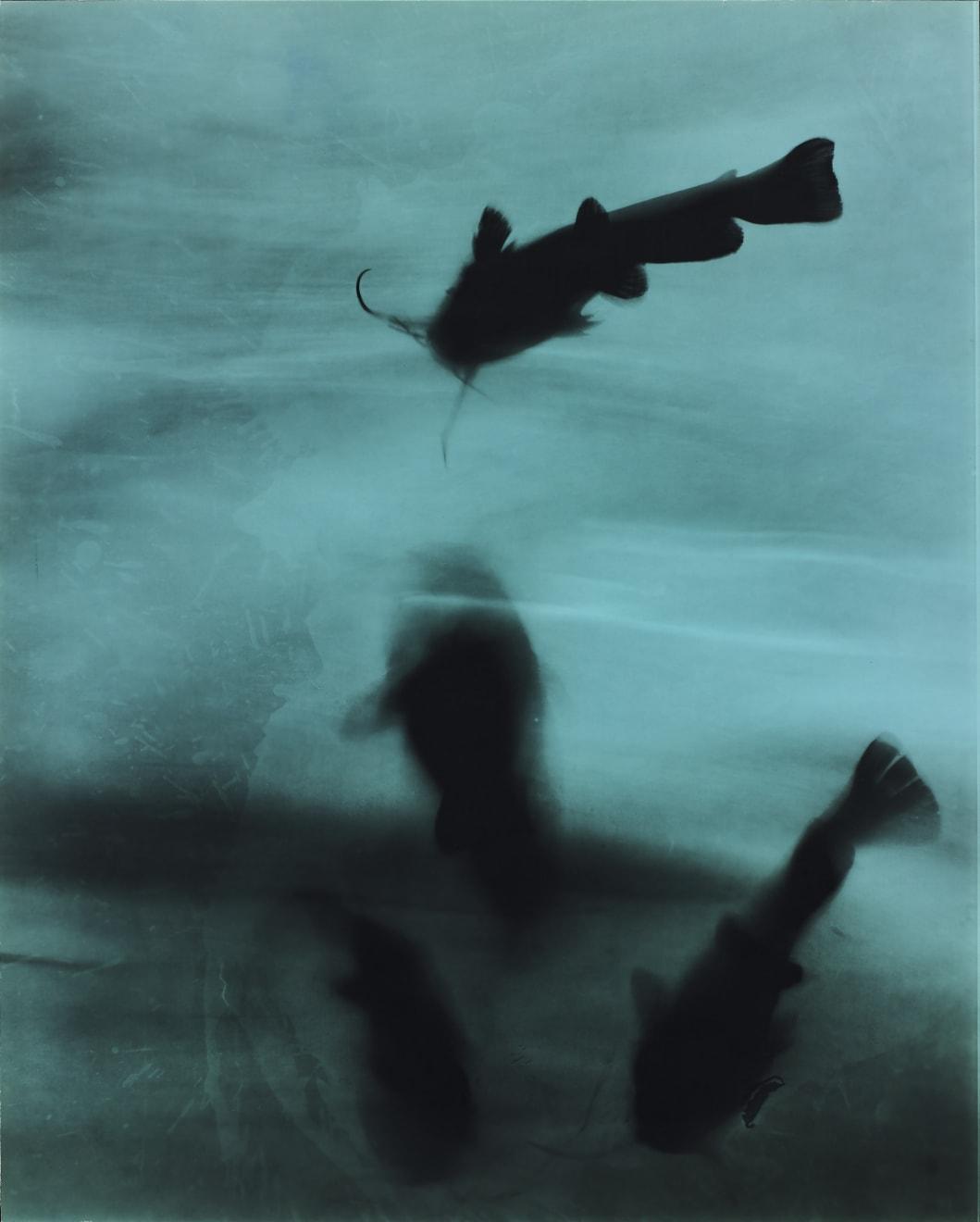 Kunié Sugiura, 4 catfish, 1996