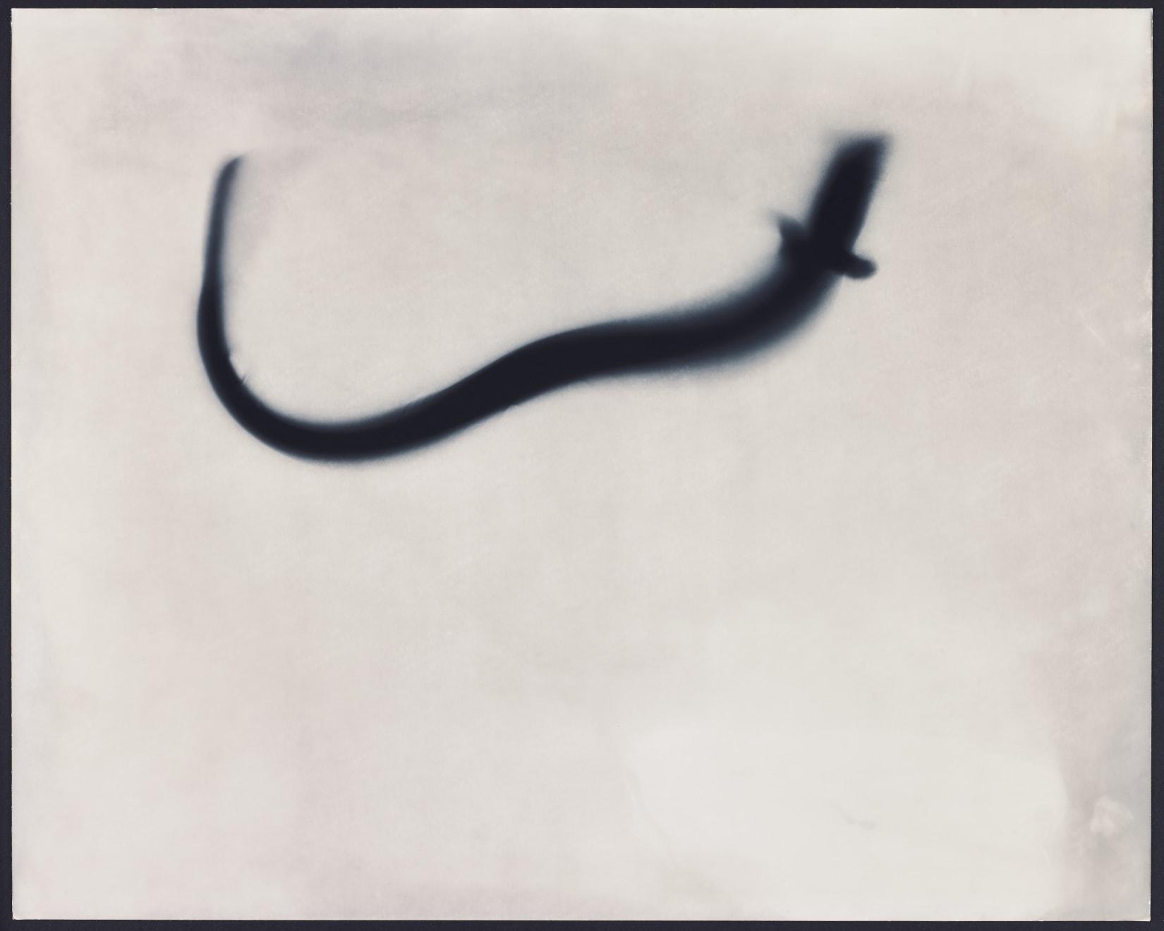 Kunié Sugiura, Eel Study Positive AP, 1997