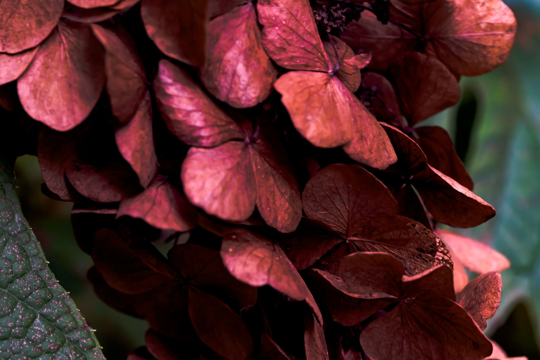 Rob Ventura, Untitled #2 (Botanical Photo), 2019