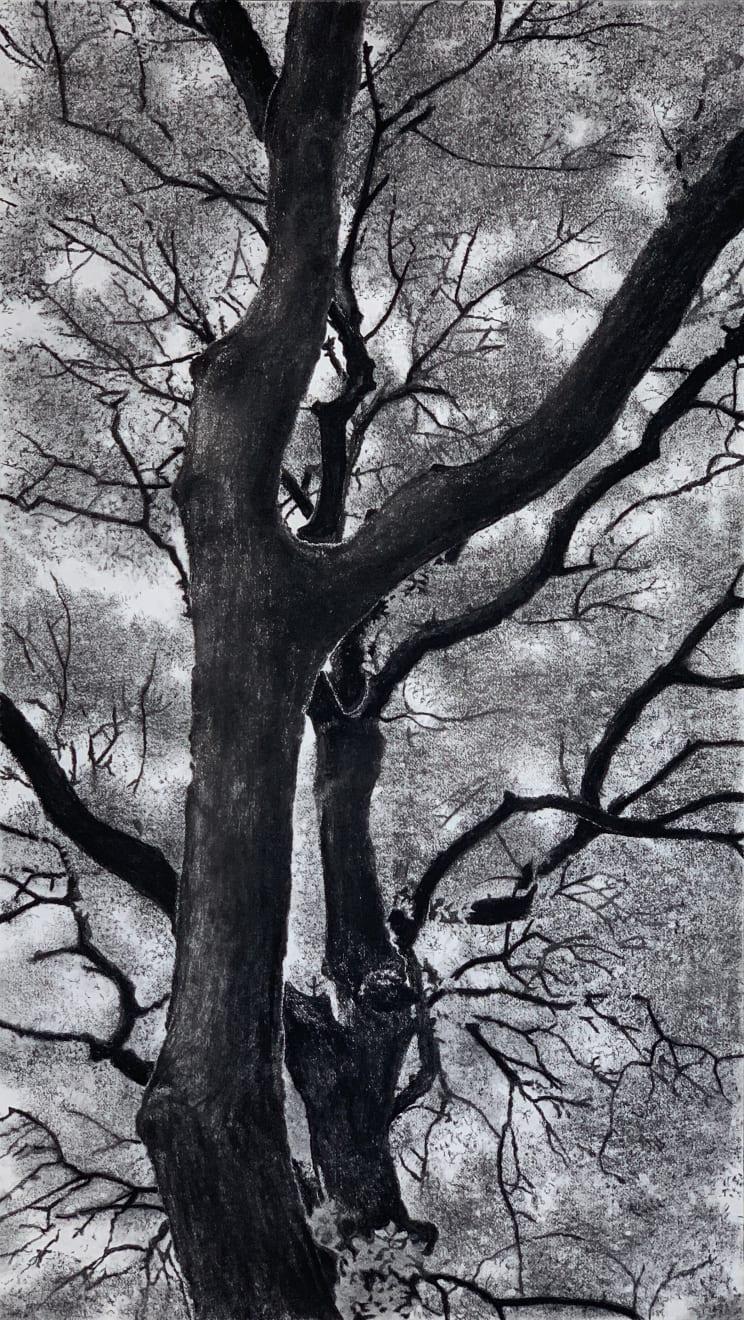 Jeffrey Blondes, 20-09D Bois de Mametz 05h02m00s, 2020