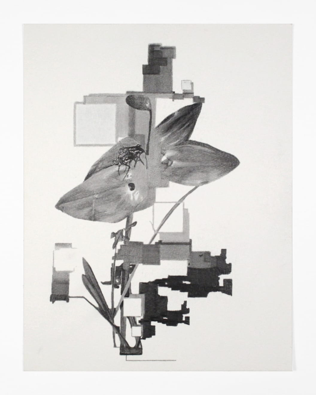 Robert Ruello Botanical_09, 2004 pencil on archival digital print on paper 11 x 8 1/2 in (27.9 x 21.6 cm) RR 116 $900