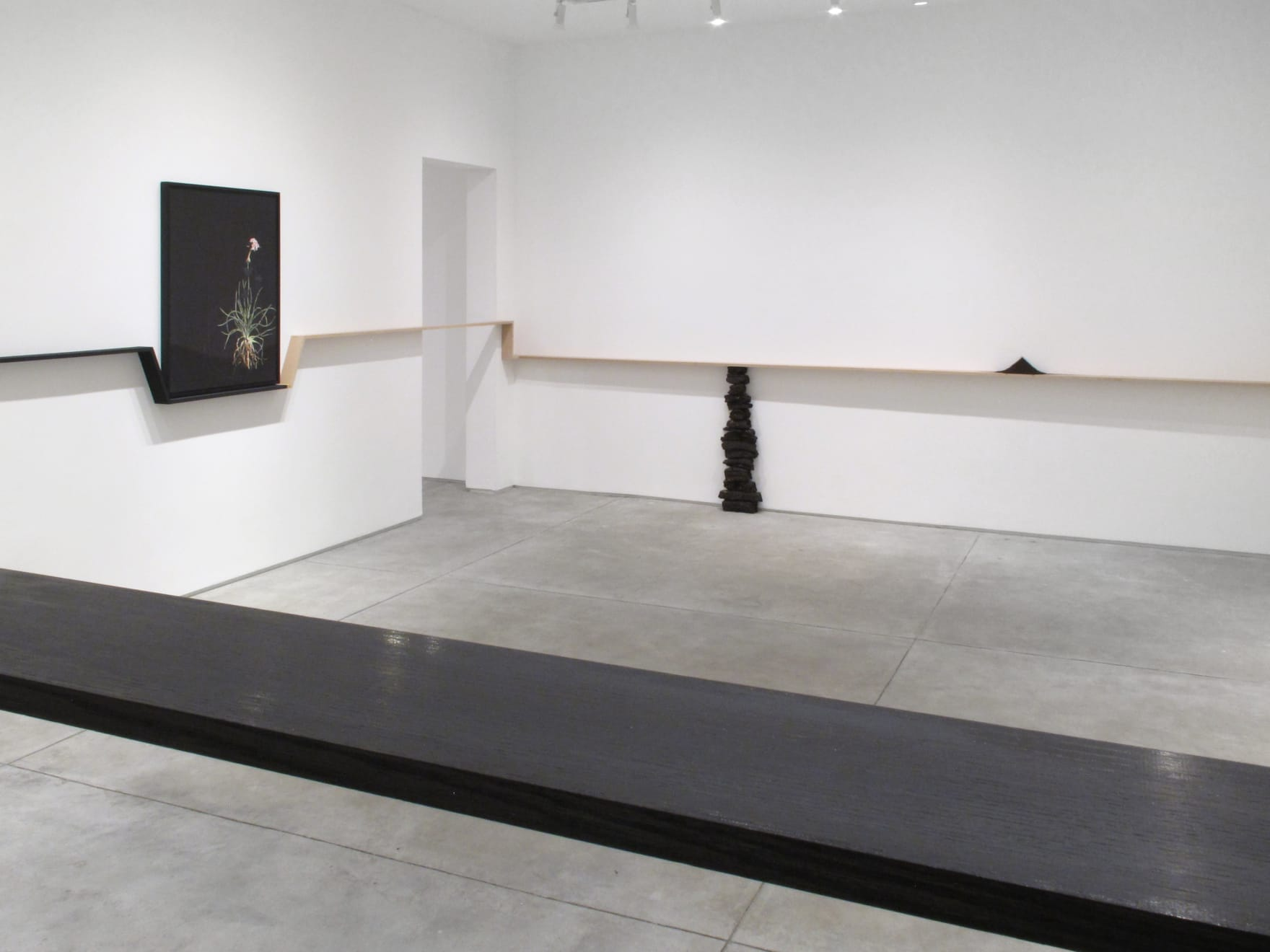 Katrina Moorhead, Dark Botanical installed at left in her solo exhibition, seapinksea, 2019