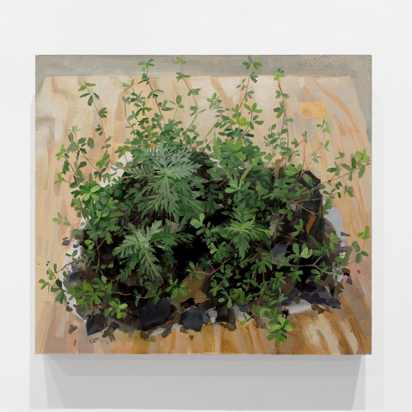 Kristin Musgnug Small Ragweed and Hop Clover from Logging Road, 2017 oil and acrylic on panel 16 x 18 x 1 1/2 in (40.6 x 45.7 x 3.8 cm) KM 227 $4,250