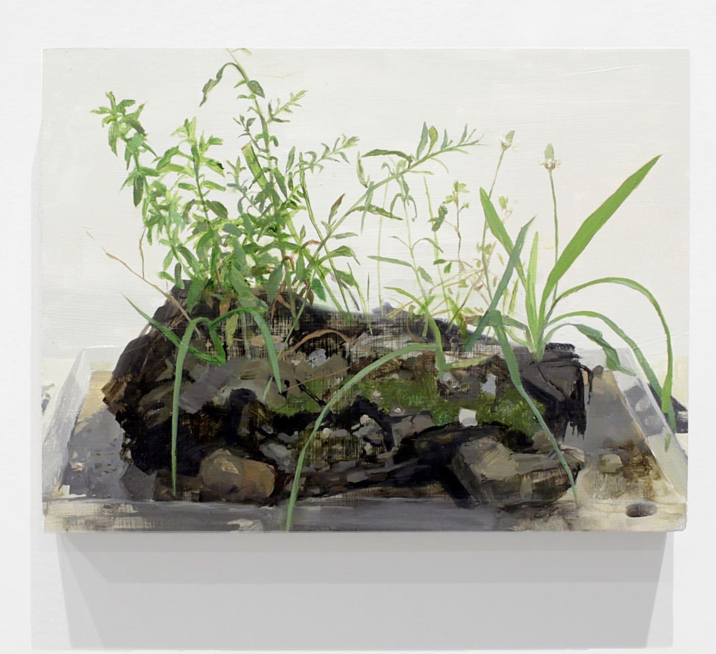 Kristin Musgnug Aster, Bush Clover, English Plantain from Sidewalk Edge, 2017 oil and acrylic on panel 12 x 16 x 1 1/2 in (30.5 x 40.6 x 3.8 cm) KM 235 $3,500