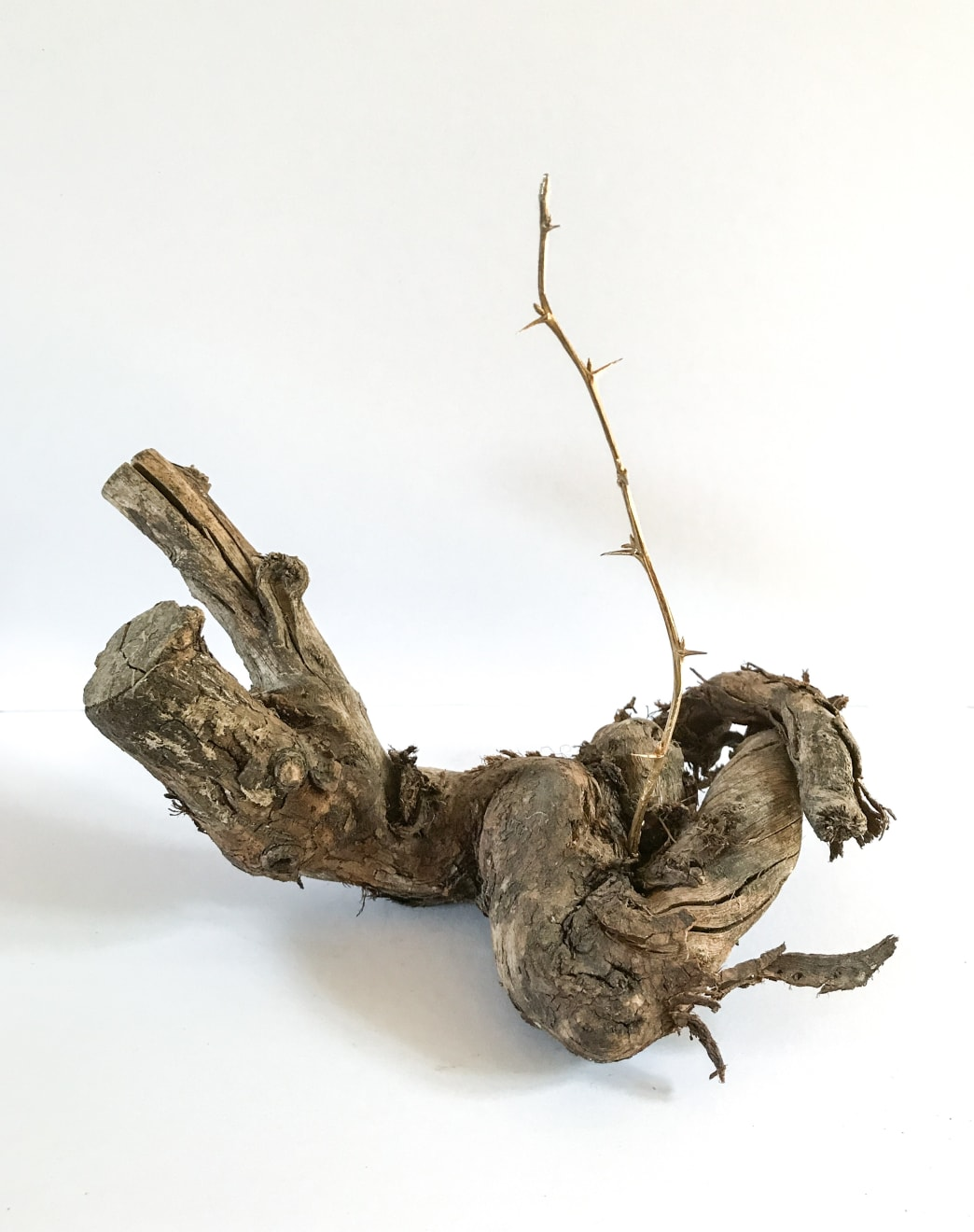 Chantal Powell, Fortuity, Gold plated silver cast of a thorned twig, dead wood, 20 x 22 x 15 cm