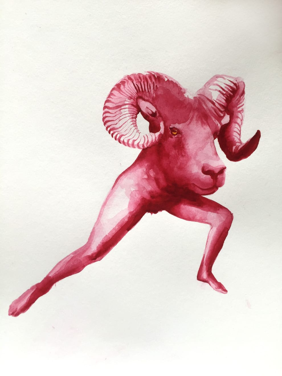 Kirsty Whiten, Ram, 2019, Watercolour, 35 x 25 cm