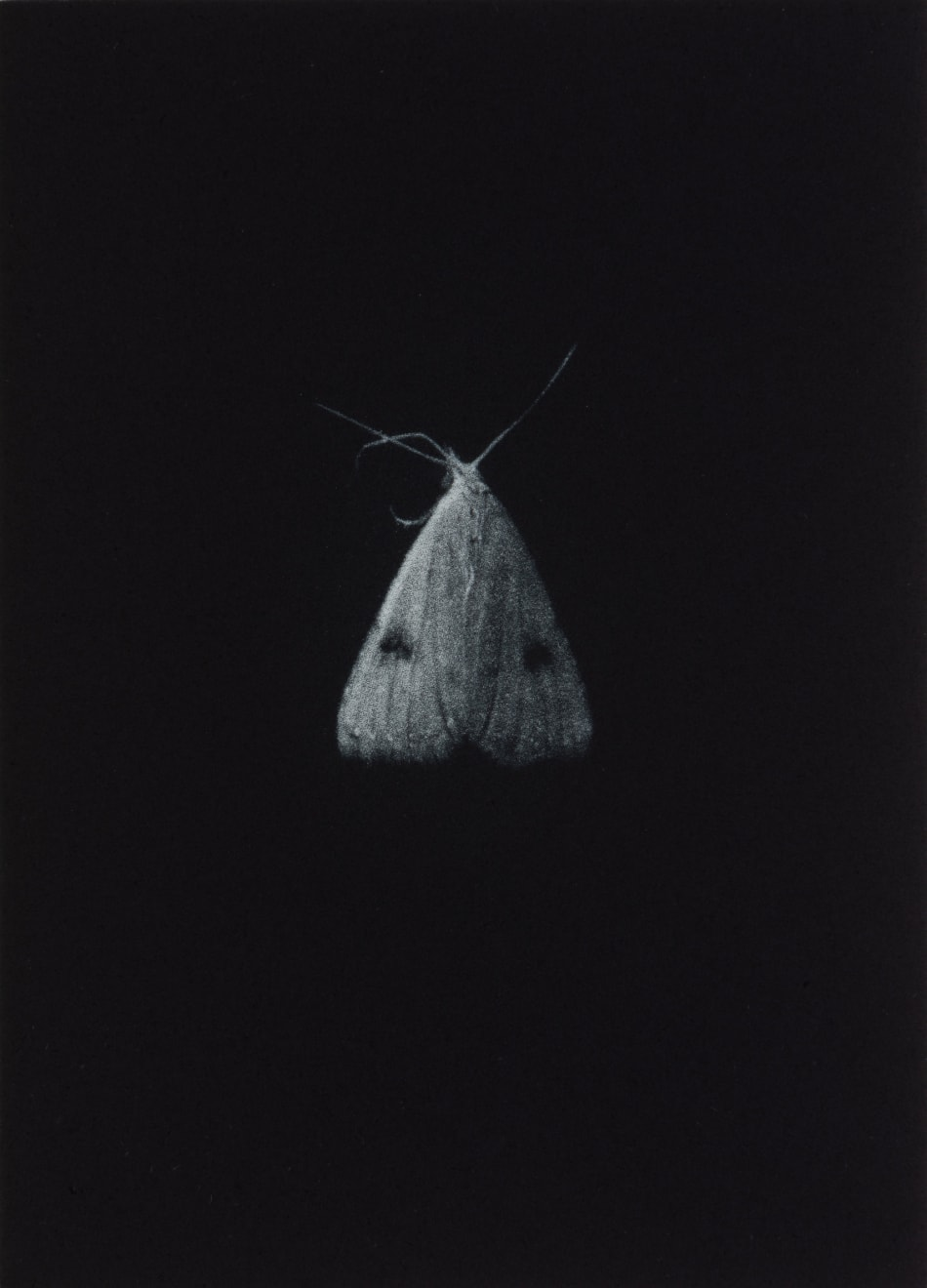 Sarah Gillespie, Straw Dot , 2019