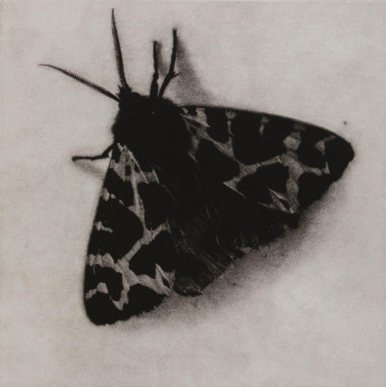 Sarah Gillespie, Garden Tiger Moth, 2019