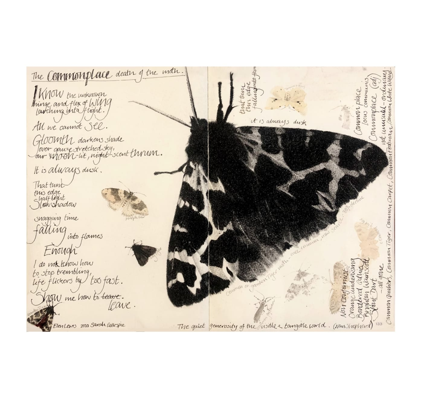 Sarah Gillespie, The Commonplace Death of the Moth, 2020