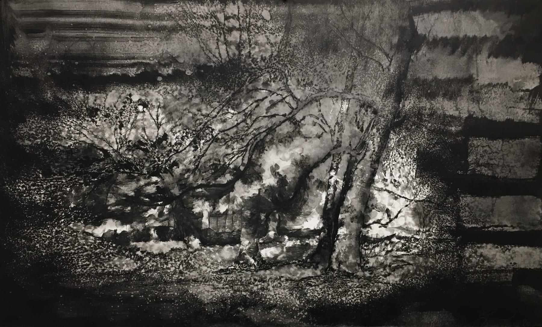 Edward Twohig, Master's Garden, Marlborough, September Light, 2019