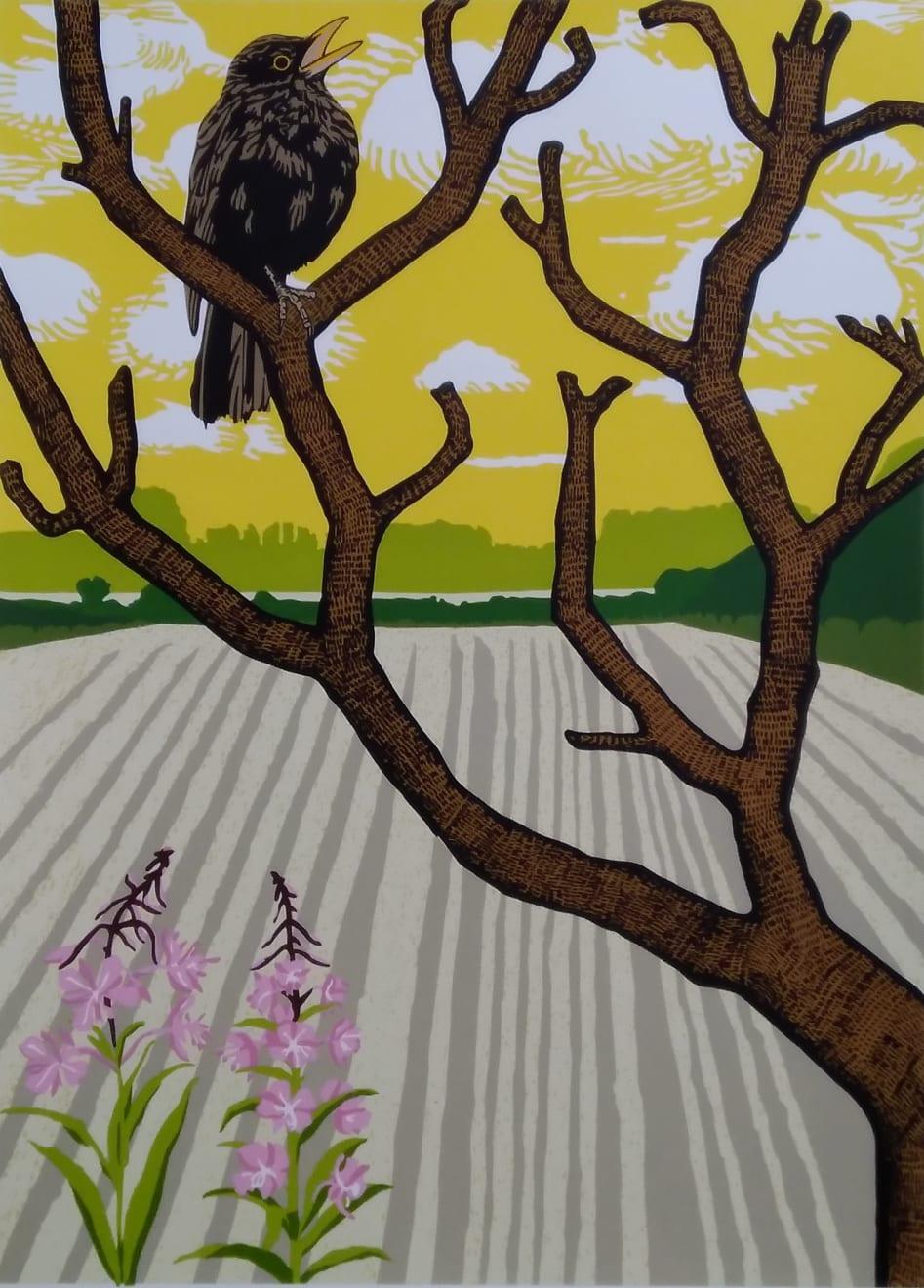 Paul Hogg, Blackbird in a Tree, Singing, 2016