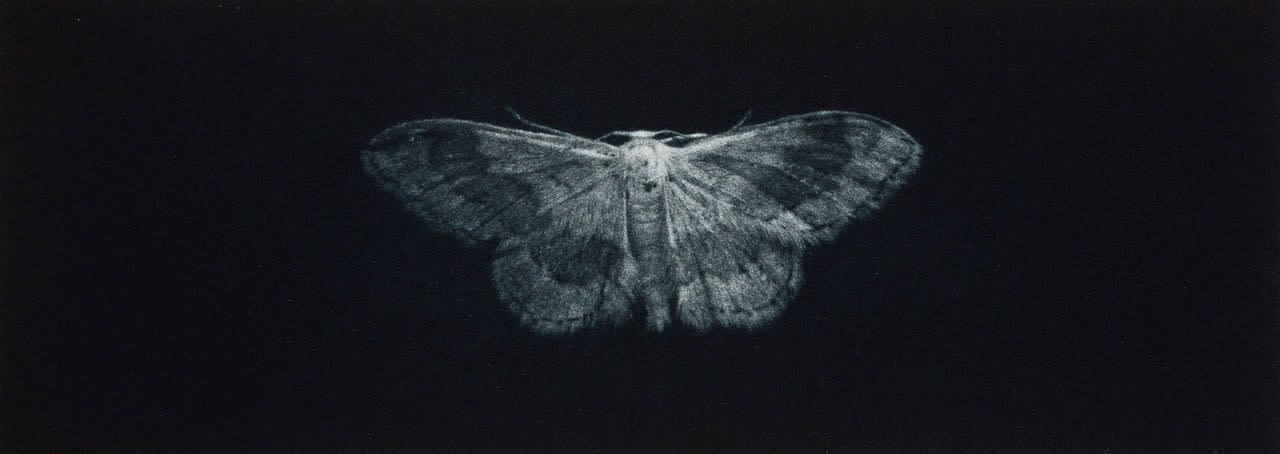 Christmas Auction 2019, LOT 69 - Sarah Gillespie - Ribband Wave Moth, 2019