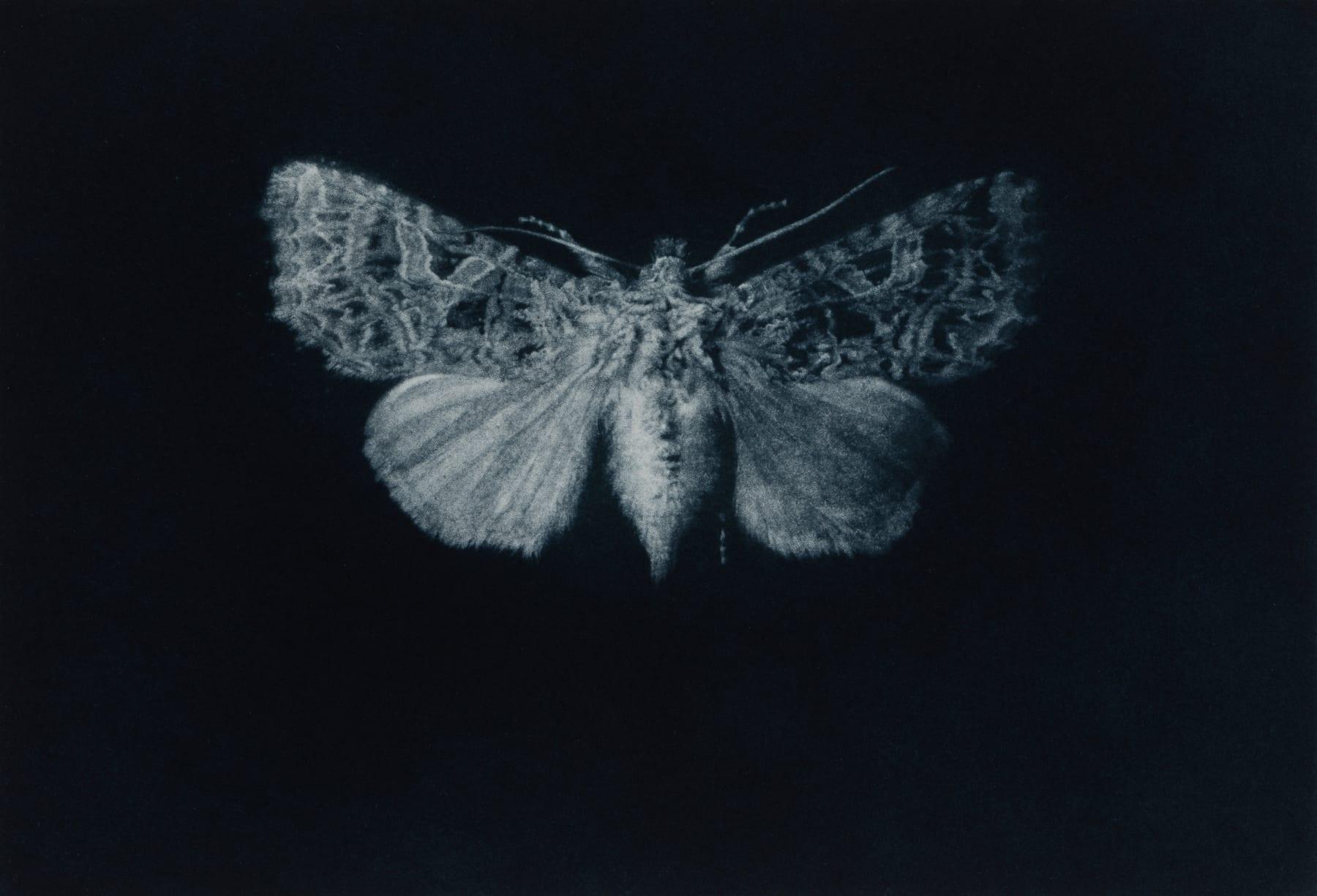 Sarah Gillespie, Campion Moth, 2019